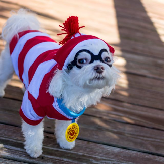 Charlie-Waldo