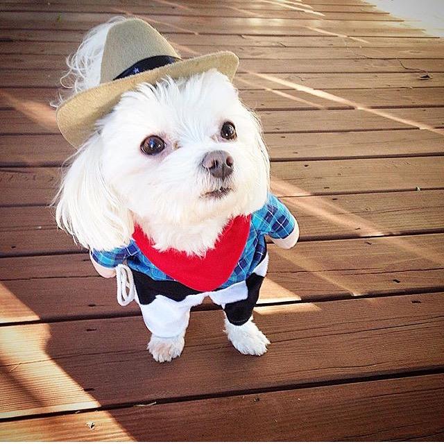 Cowboy-Charlie