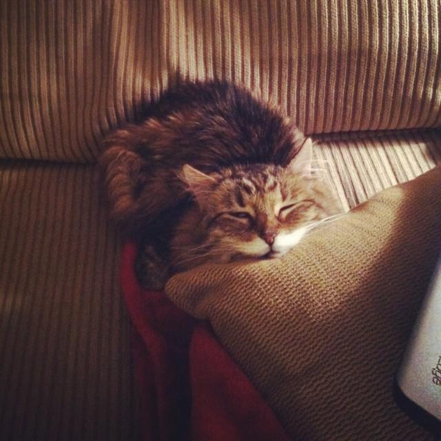 KittenSleeping