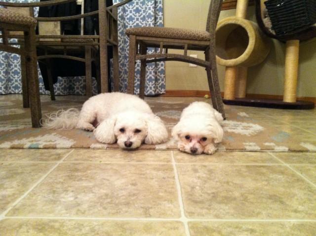 LuLu and Charlie
