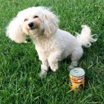 How a 10lb. Poodle Changed My Life